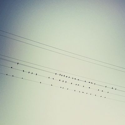 I've been trying for months to get a shot of either birds in flight or birds on a wire. This is the closest I've gotten. #roadtripbsides Lachlanpayneawesomeamazingphotosbestinstagramereverfollowmenow Payneroadtrip Roadtripbsides