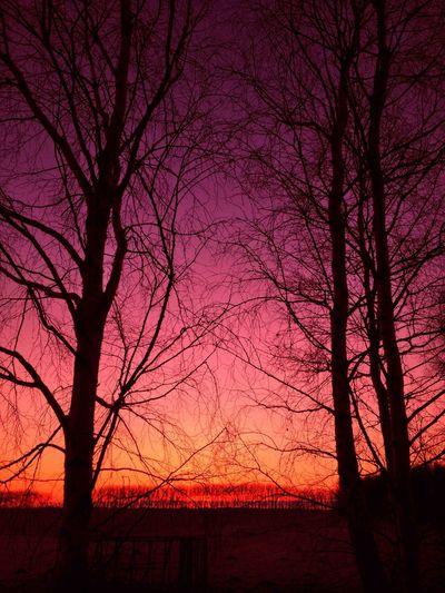 Tadaa Community Sun Rise Danmark Tree Silhouette