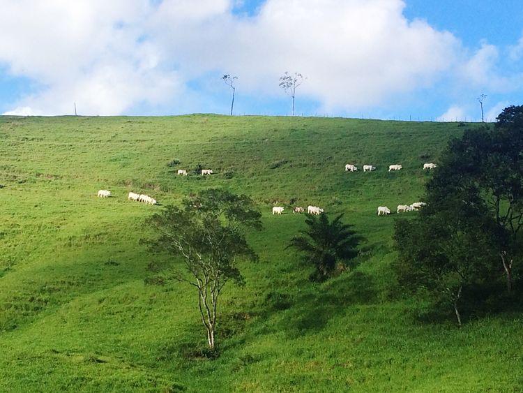 💚 Green Green Color Green Green Green!  Green Fields Fields Field Fieldscape Nature Sky Blue Sky Blue