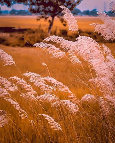 The winds. Beauty Rural Scene Backgrounds Desert Full Frame Flower Head Summer Mountain Agriculture Sand Dune Plant Life Growing Wilderness Area