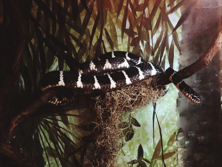 #Snake #Chicago #iphonex Brookfield Zoo #beatifulcolors