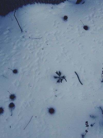 Snow Frozen Frozenpond Footprints In The Snow 🐦 Prints Animal Wildlife Insect Animals In The Wild Animal Themes Colony Large Group Of Animals Flying Outdoors Bird No People Aerial View Day Nature Flamingo Close-up Mammal