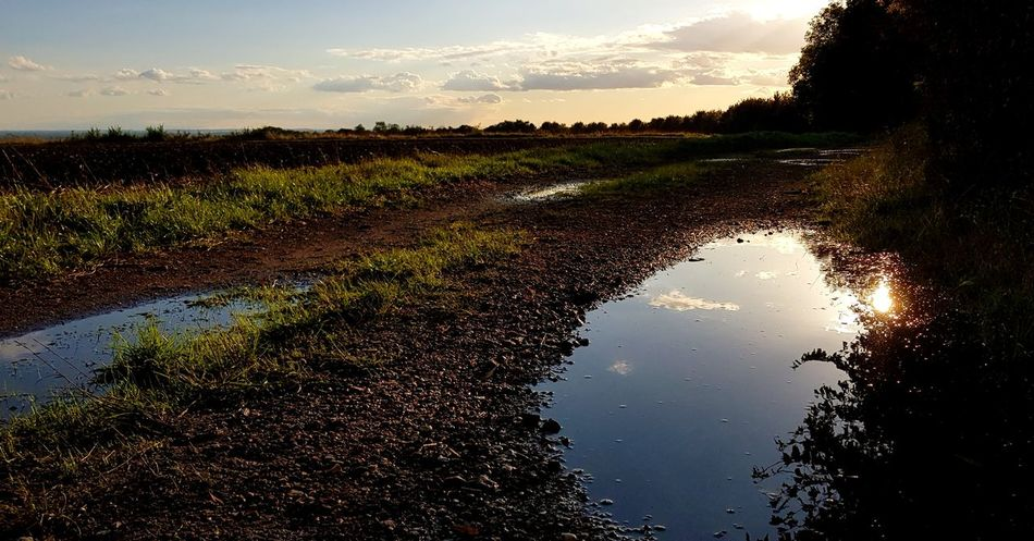 Tree Water Sunset Puddle Agriculture Reflection Sky Cloud - Sky