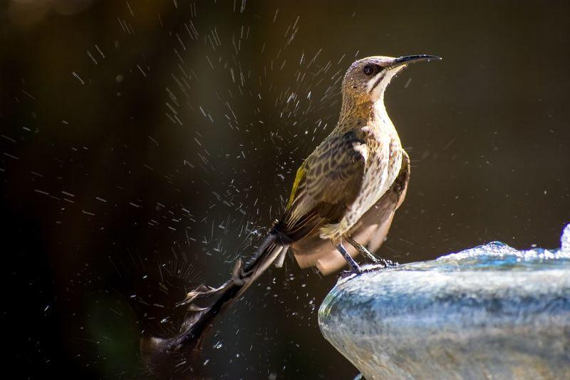 Close-up of bird perching on birdbath