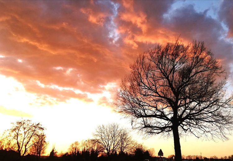 Red clouds Tree