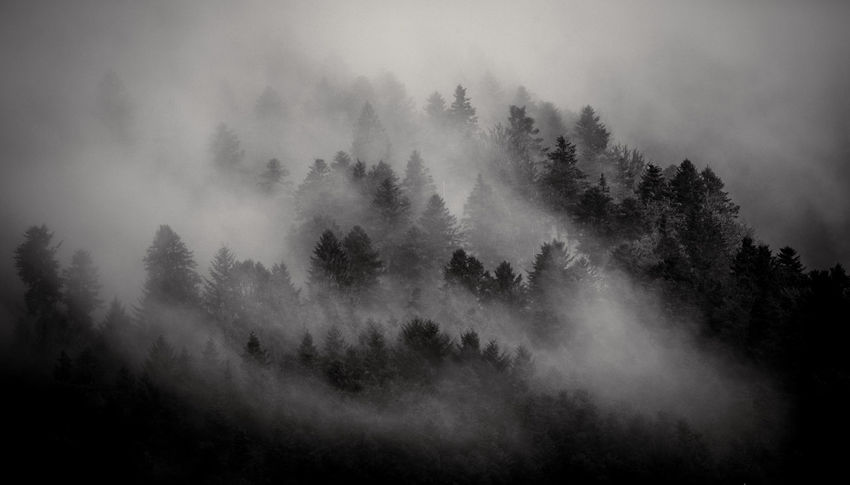 Schwarzwald Beauty In Nature Black Forest Day Fog Forest Growth Hazy  Landscape Majestic Mist Mountain Nature No People Outdoors Scenics Sky Tranquil Scene Tranquility Tree