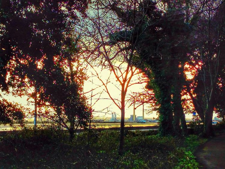 Landscape Trees Sunset Dublin Bay