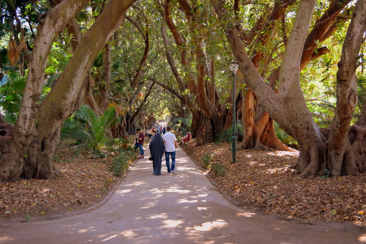 Rear view of people walking amidst trees