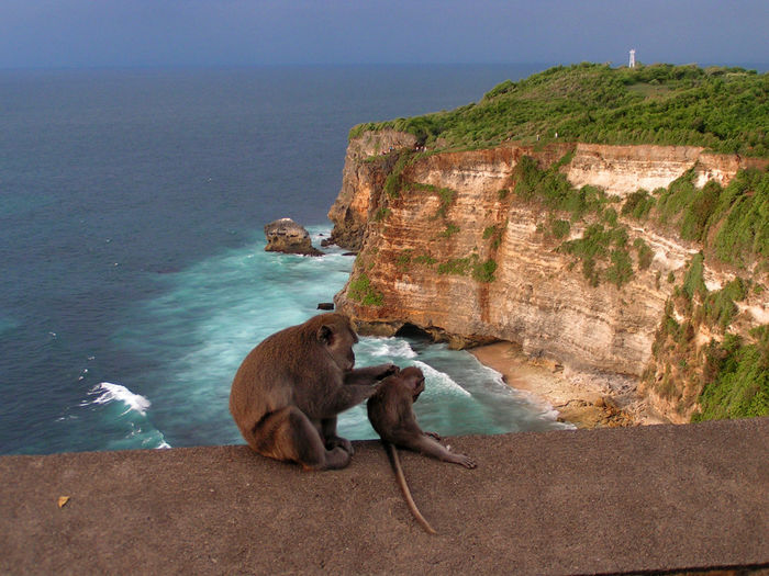 Monkey with infant sitting on wall by cliff at uluwatu