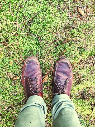 Moss Mossporn Walk Nature Forest Green Denmark Billund Out For A Walk Llbean From Where I Stand Where I Stand