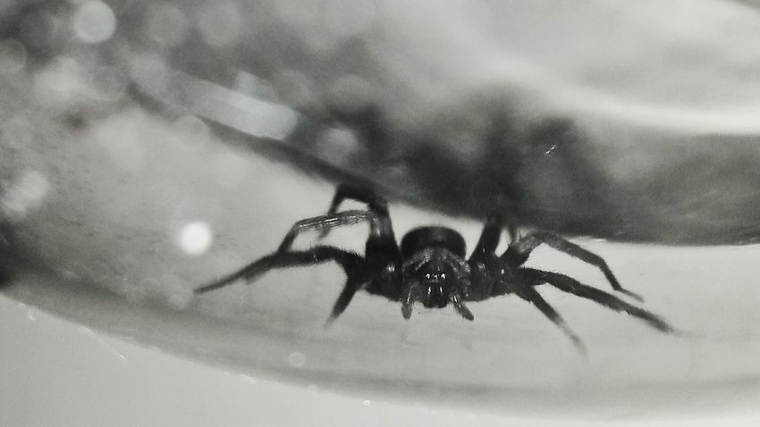 Check This Out Spider Insects Collection Spider World Spiderworld Black And White Check This Out EyeEm Gallery Showcase July Eyeem Photography Black And White Photography sp Spider Sacramento, California Macro Photography Eyeemphoto