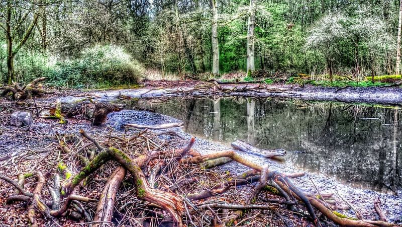 Frankfurt Am Main Hdr_Collection Nature Wood #forest