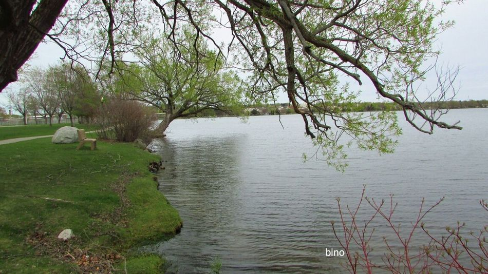 Out Shooting Around The Lake Grey Day Still Green Windy Day Cool_capture_ Tranquility Lake Cadillac Pure Michigan