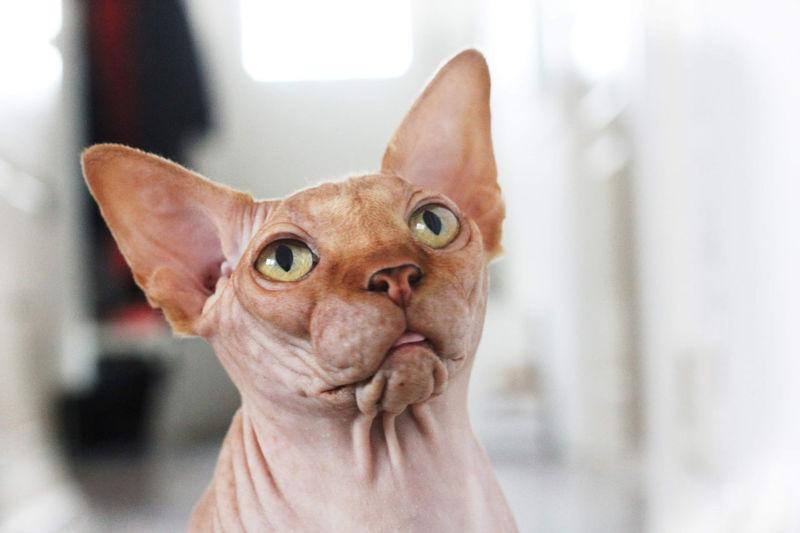Portrait of cat on hand
