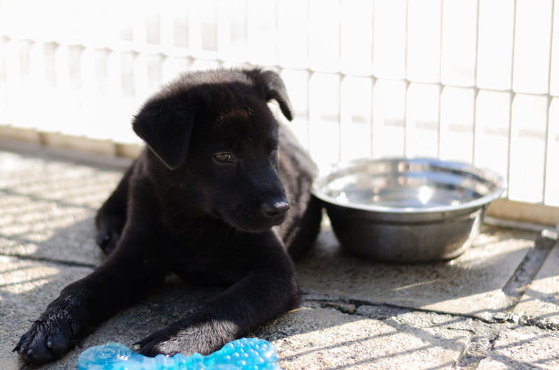 Puppy portrait Mongrel Relaxing Animal Themes Black Black Color Bowl Canine Close-up Cute Dog Domestic Animals Kennel Mammal Mix Breed Multibreed No People One Animal Outdoors Pets Puppy Sitting Water