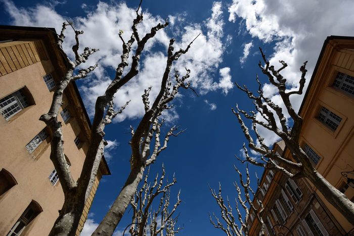 No leaf trees in Aix-en-Provence, Provence Aix-en-Provence Blue Building Exterior City Cityscape Cityscapes Cloud - Sky Cloudy France No Leafs No Leaves No People Outdoors Plant Platanus Provence Sky Tourism Travel Destinations Traveling Tree Trees Trees And Sky