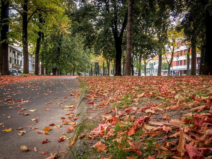 Urban foliage