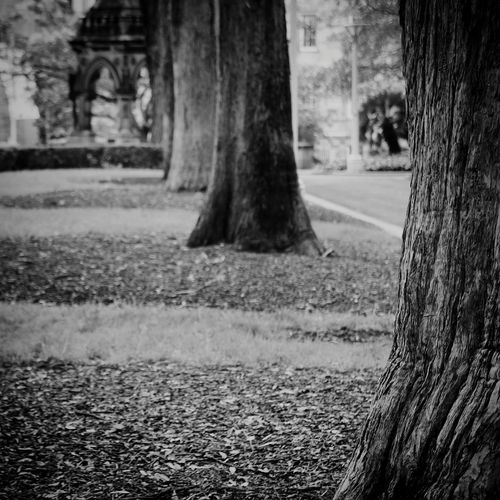 Black And White Depth Of Field Trees Atmospheric Mood Spooky Atmosphere Front View At The Park Bokeh Showcase: November