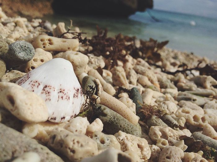 seashell in the seashore Beach Beach Photography Beach Life Beach Day Shell Dried Corals Enjoying Life Enjoying The Sun Ilove Beach At The Beach Relaxing EyeEm Gallery Eyeem Philippines Eyeem Asia Eyeem Bohol White Beach IPhone Photography