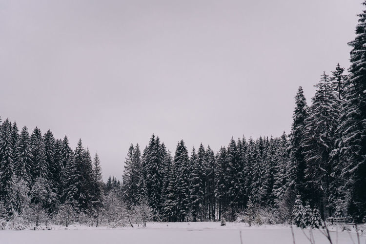 Pine trees on snowy field against sky during winter
