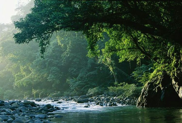 Gorgeous 😍 Notmypicture Forest Water Futurehomelocation WOW Green Trees This Is Our World Our Home