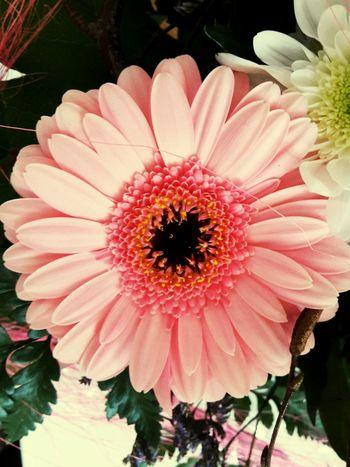 Enjoying Life Flowers Hello World EyeEm Nature Lover Flower