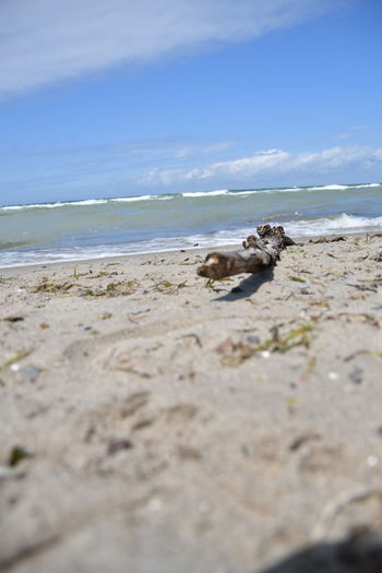 View of crab on beach against sky