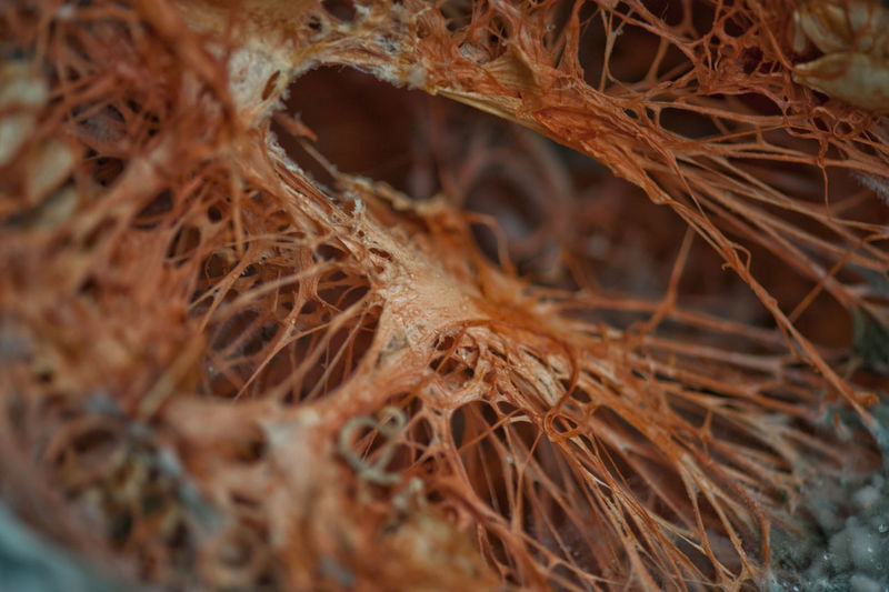 Punkin Textured  Abstract Close-up Day Decayed Beauty Decayed Punkin Decaying Fungus Fungus On Close Look Fungus Patterns Fungus 🍄 Fungusphoto No People Plant Selective Focus