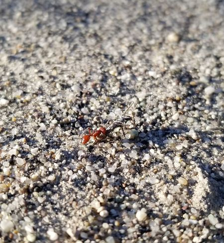 Tiny Insect Sunlight Colony Close-up Ant