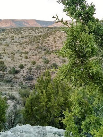 Beaver Creek at sunset Sand Dune Tree Sand Sky Landscape Arid Landscape Desert Tranquility Tranquil Scene Scenics