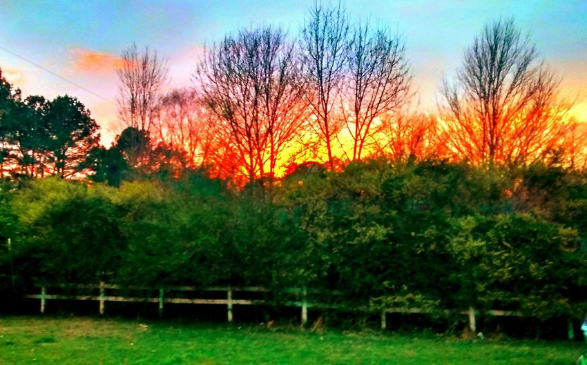 New Market AL Check This Out Taking Photos Enjoying Life Relaxing Good Times Showcase March Enjoying Life Sunset Sunset_collection Beautiful Nature WOW From My Doorstep My Front Yard Alabama Sunset The Great Outdoors - 2017 EyeEm Awards