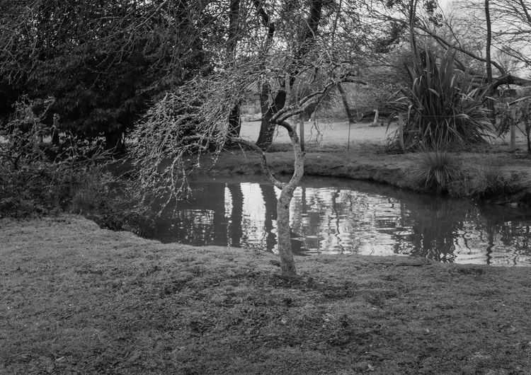 Tree Water Reflection No People Tranquility Tranquil Scene Outdoors Blackandwhite