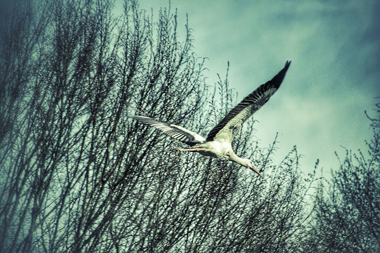 animal themes, animals in the wild, flying, spread wings, bird, one animal, day, animal wildlife, mid-air, nature, no people, outdoors, low angle view, full length, beauty in nature, tree, sky, close-up