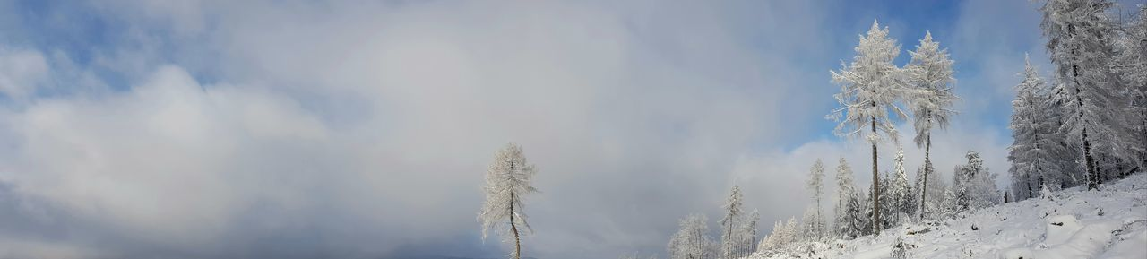 Panoramic shot of snow covered plants against sky