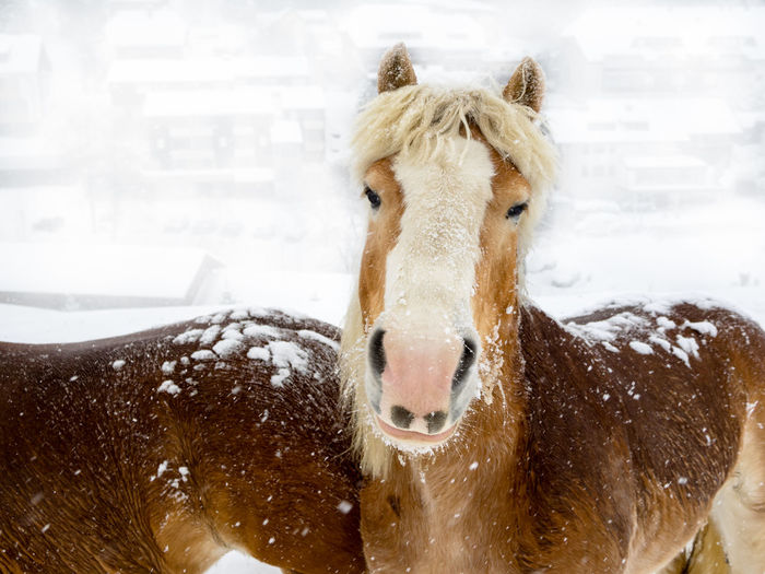 Close-up of horse on snow