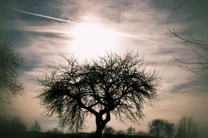 Tree Nature Sunset Outdoors Beauty In Nature Sky No People Sun Landscape Day Nature On Your Doorstep Landscape_photography Sunshine Branch Beauty In Nature Nature_collection Silhouette Patterns Of Nature One