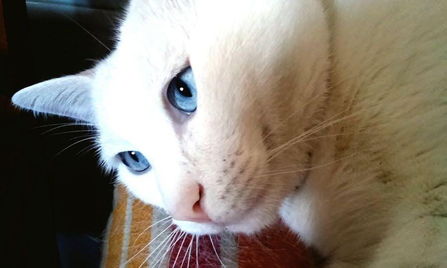 Gatinho Cats Of EyeEm Pet Photography  Catoftheday Cat Eyes Cats 🐱 Kitty My Kitty