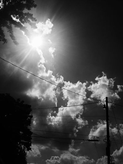 Back Lit Beauty In Nature Bright Cloud Cloud - Sky Cloudy Day Growth Lens Flare Low Angle View Nature No People Noir Outdoors Power Line  Power Supply Scenics Sky Sun Sunbeam Sunlight Tranquil Scene Tranquility Tree Showcase June