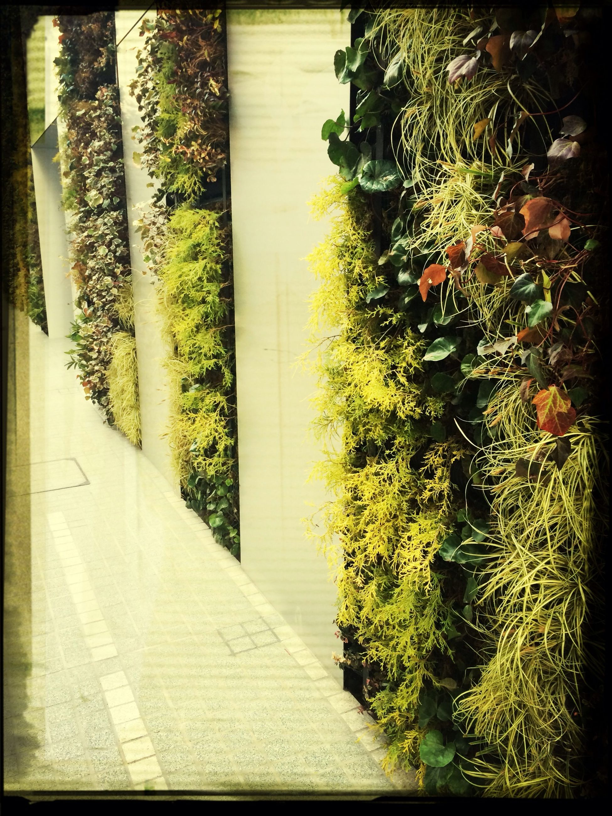 transfer print, growth, plant, auto post production filter, tree, green color, sunlight, nature, shadow, potted plant, day, high angle view, leaf, no people, footpath, outdoors, green, tranquility, growing, built structure