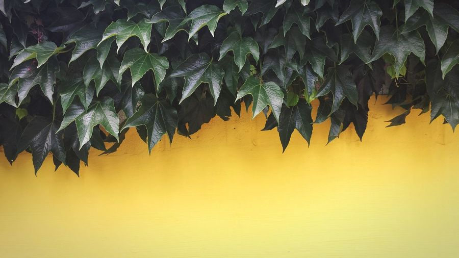 Yellow Leaves Minimalism Wall Fine Art Photography Home Is Where The Art Is Colour Of Life Colour Palette TakeoverContrast
