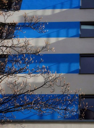 Low angle view of bare tree and building against blue sky