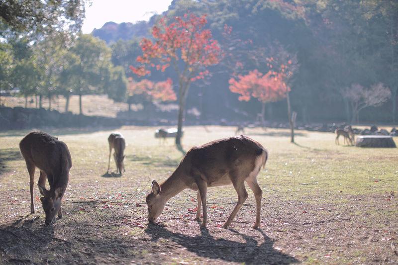 Group of doe grazing on field