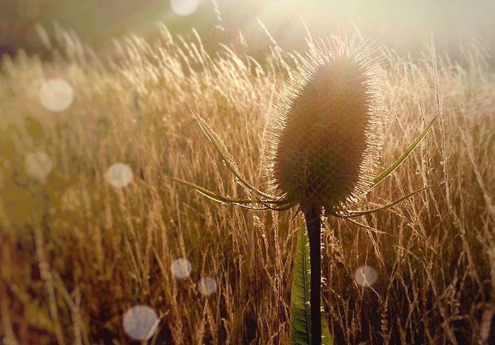 Beauty In Nature Wildflower Field Nature Sun Sunshine ☀ Summer Woodland Walk Late Summer Colours Harvest Time Summer Views