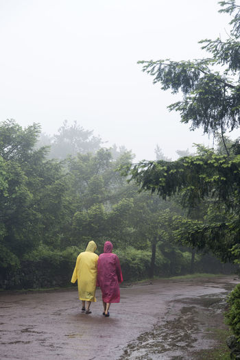 rainy day of Bijarim which is a famous forest in Jeju Island, South Korea Adult Bijarim Bonding Day Forest Full Length Growth JEJU ISLAND  Men Nature Outdoors Pathway People Rain Rain Coat Rainy Real People Rear View Road Sky Togetherness Tree Two People Walking Women