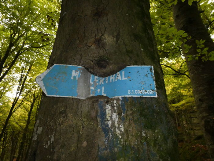 Tree Tree Trunk Day Outdoors No People Forest Nature Close-up Mullerthal Trail Müllerthal Luxemburg Luxembourg Wald Scenics Sign Schild Hiking Hiking Trail Wandern Wachstum Growth