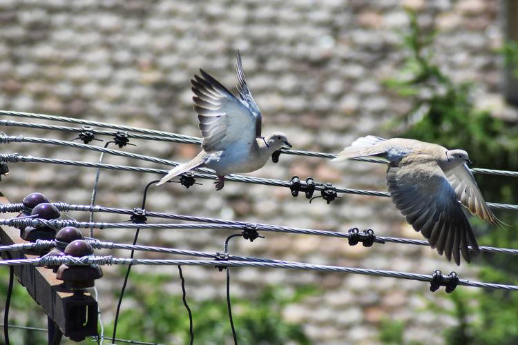 Birds flying above a bird