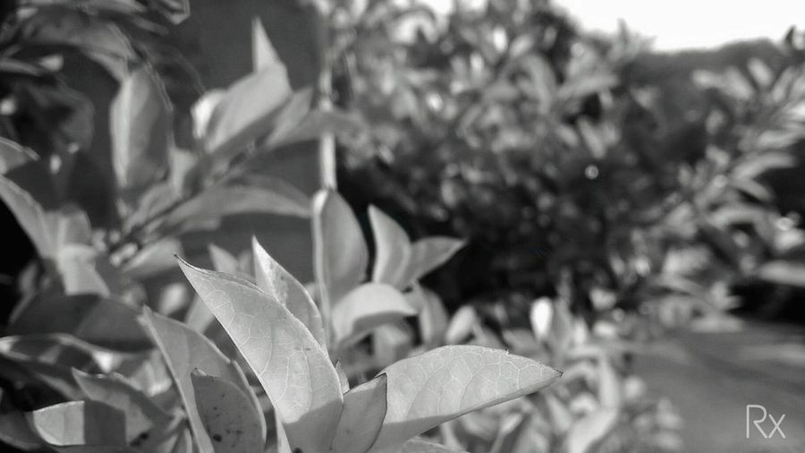 Ooty,India Mood Destination Village Tourism Ooty Nature Nature_collection Nature Photography Traveling Wanderlust Countryside Country Life Sunlight Morning India Travel Photography Travel Tree Blackandwhite Colourism Mood Captures Travel Destinations Moments Flower Leaf Close-up Plant Thorn Tourist Attraction  Television Tower EyeEmNewHere Visual Creativity