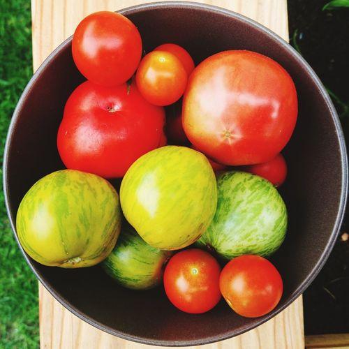 Tomatoe-Harvest