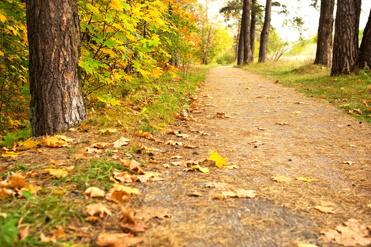 Surface level of road amidst trees in forest during autumn