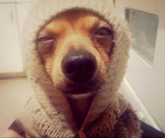 Tu cara cuando se activa la cam frontal accidentalmente Cute Pets Funny Faces Fuunymomemt Dogs